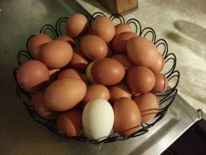 A full basket of eggs.