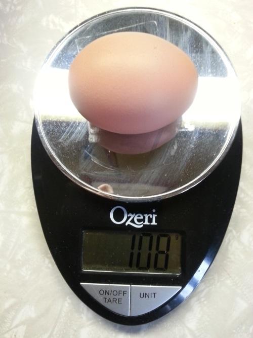 omg egg