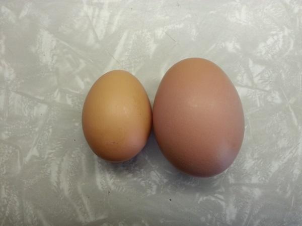 size comparison