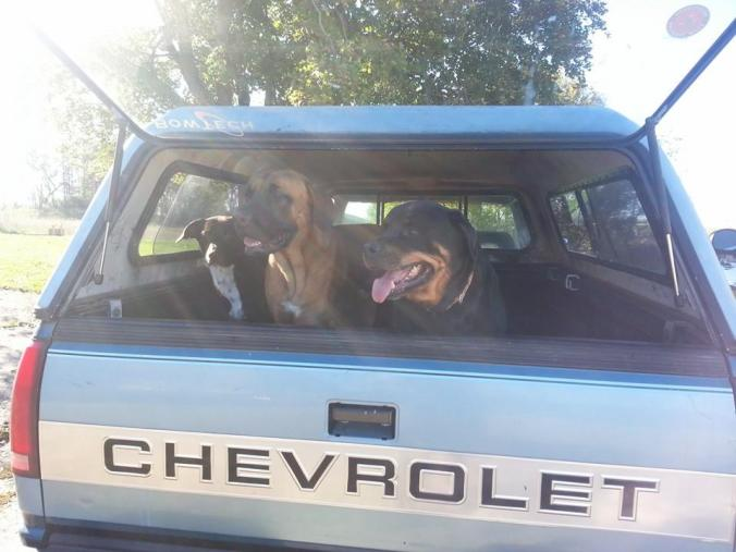 The boys ready for a ride in the farm truck.